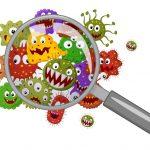 kuman dan bakteri